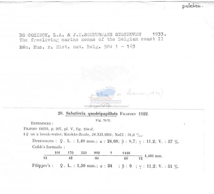 Sabatieria pulchra