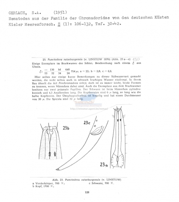 Punctodora ratzeburgensis