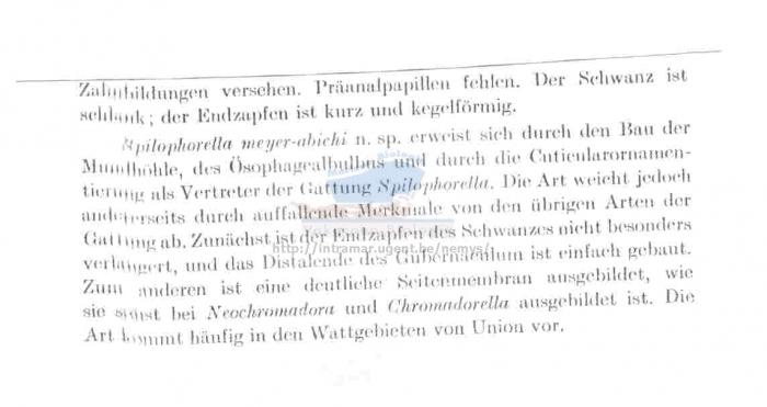 Spilophorella meyerabichi