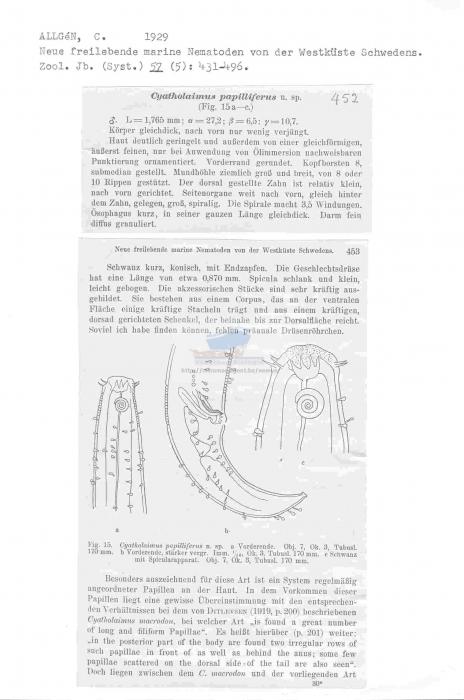 Cyatholaimus papilliferus