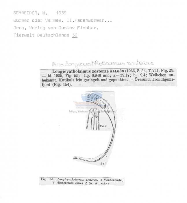 Paralongicyatholaimus zosterae