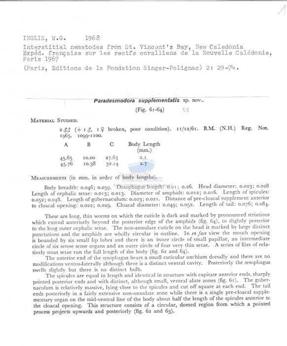 Paradesmodora supplementatis