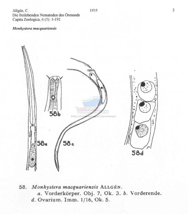 Monhystera macquariensis
