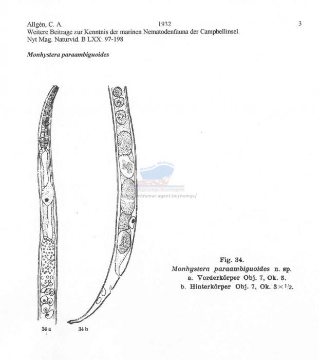 Monhystera paraambiguoides
