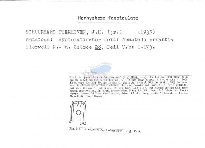Monhystera fasciculata