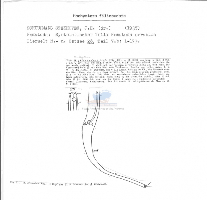Monhystera filicaudata