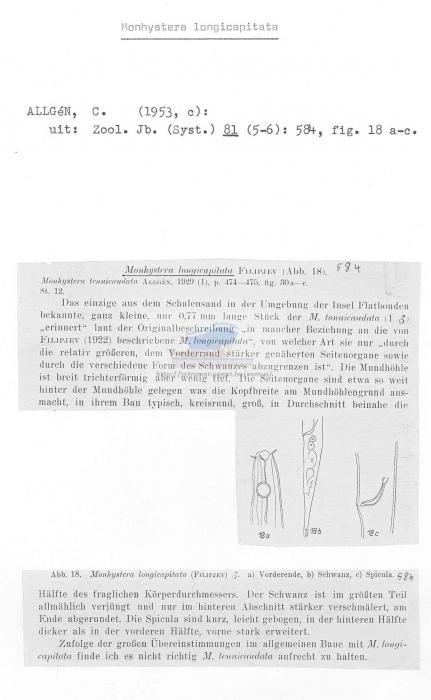 Monhystera longicapitata