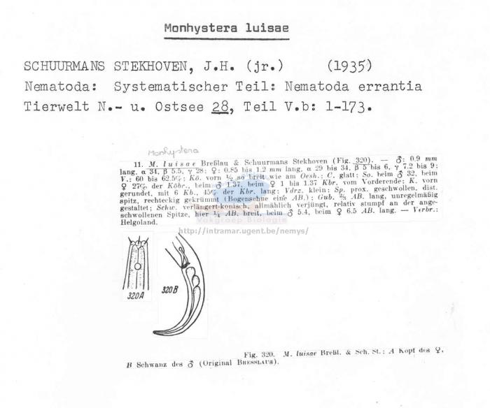 Monhystera luisae