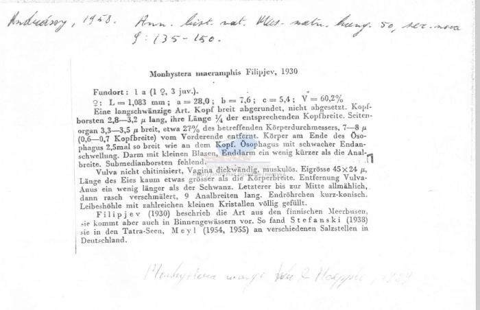 Monhystera macramphis