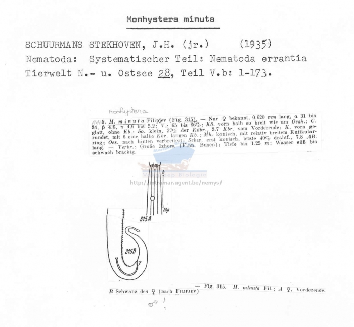 Monhystera minuta