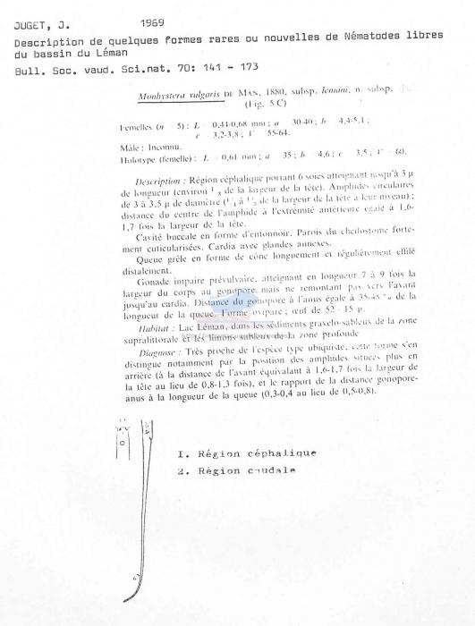 Monhystera vulgaris