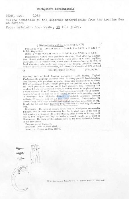 Monhystera karachiensis