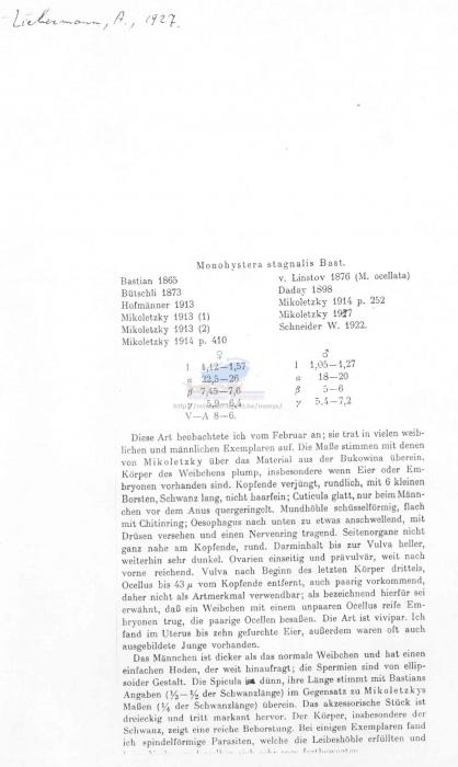 Monhystera stagnalis