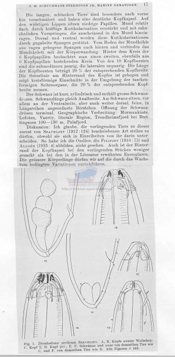 Deontostoma arcticum