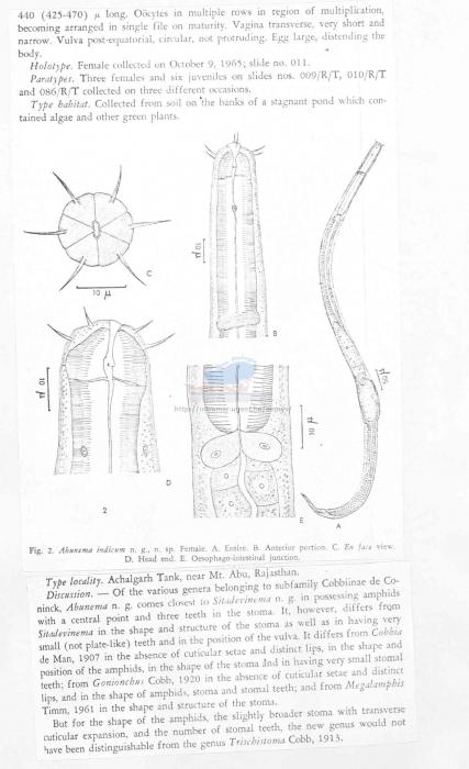 Abunema indicum