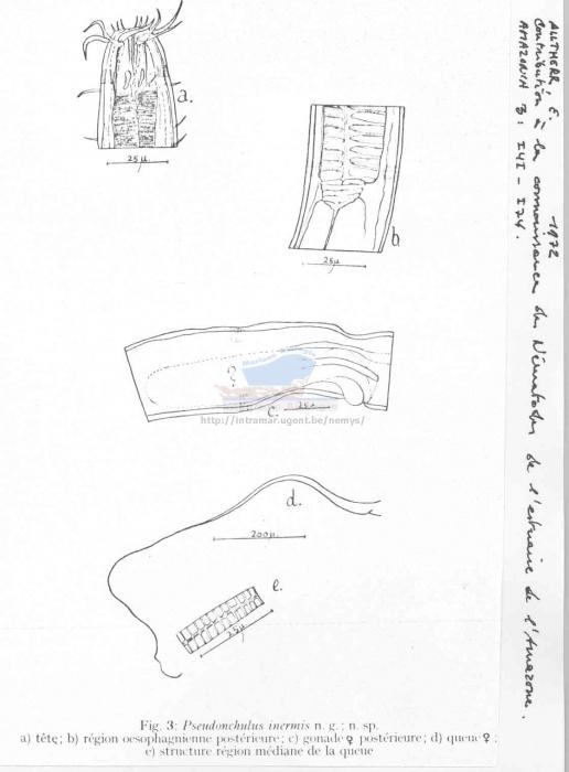 Pseudonchulus inermis