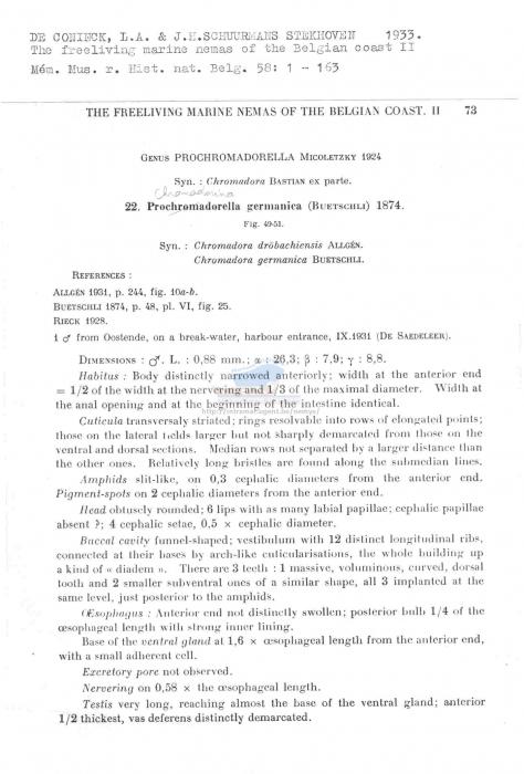 Chromadorina germanica