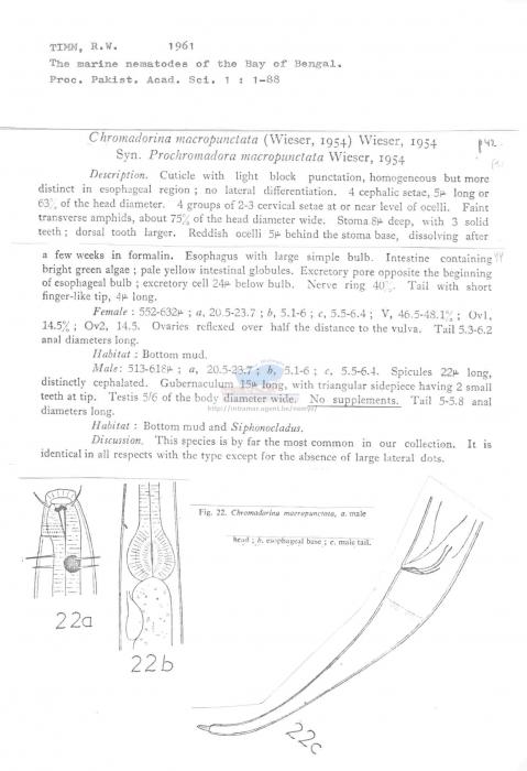 Chromadorina macropunctata