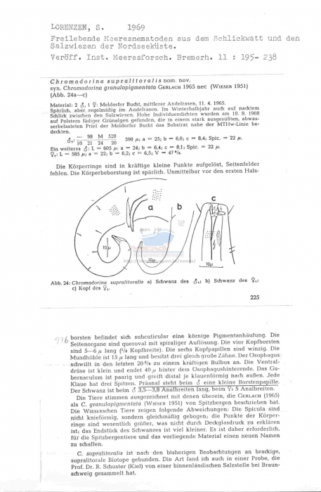 Chromadorina supralitoralis