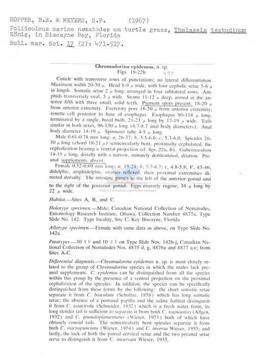 Chromadorina epidemos