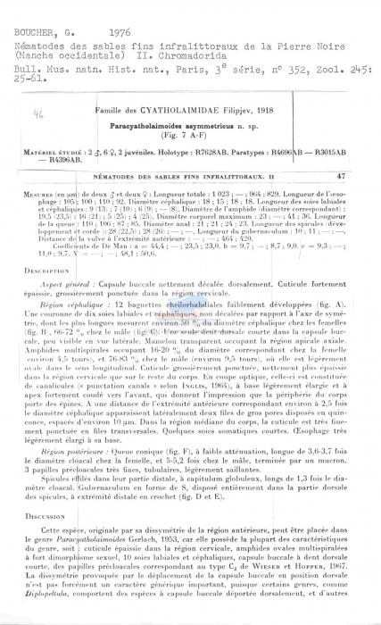 Paracyatholaimoides asymmetricus