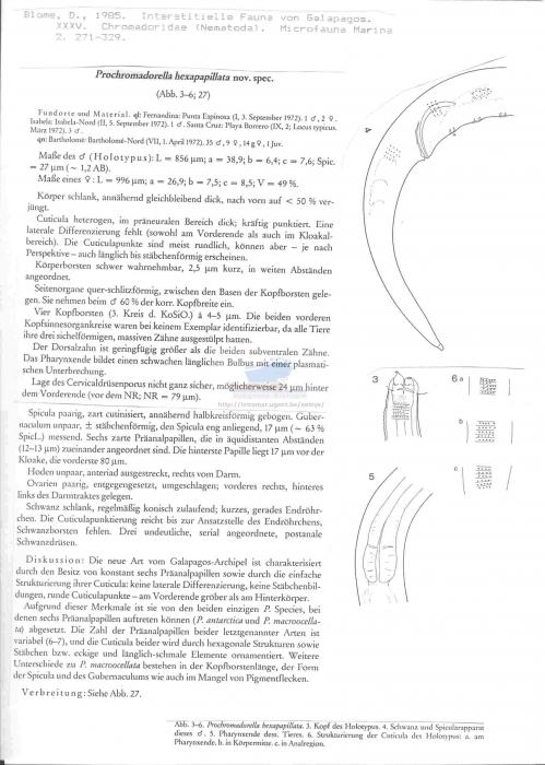 Prochromadorella hexapapillata