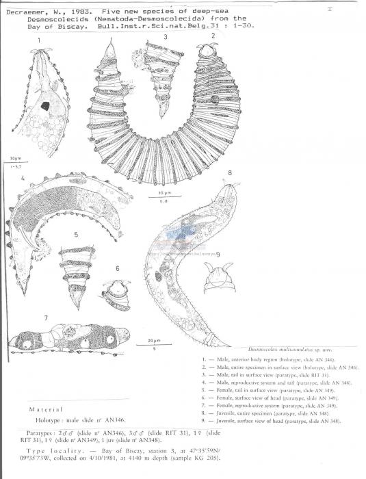 Desmoscolex multiannulatus
