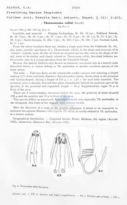 Thoracostoma vallini
