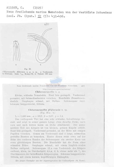Chloronemella filiformis