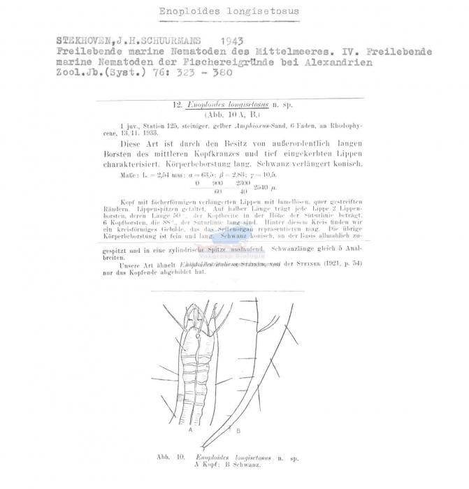 Enoploides longisetosus