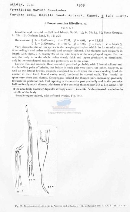 Eurystomina filicolle