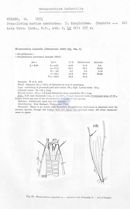 Mesacanthion infantilis