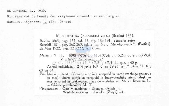 Monhystera velox