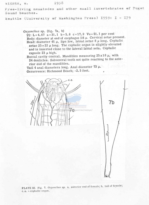 Oxyonchus