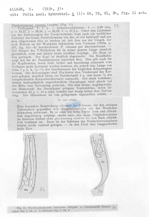 Paralinhomoeus viscosus