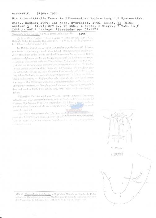 Chromadorita tentabunda