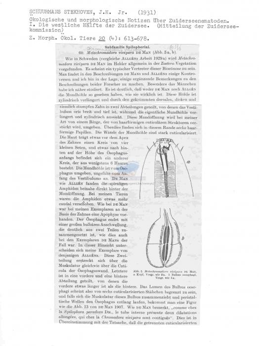 Chromadoropsis vivipara