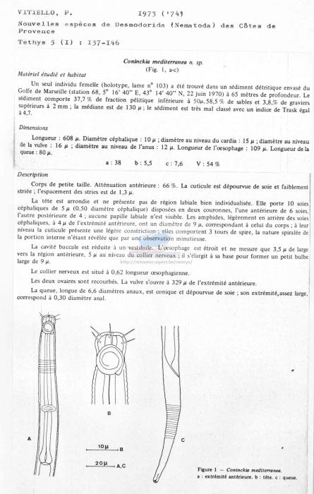 Coninckia mediterranea
