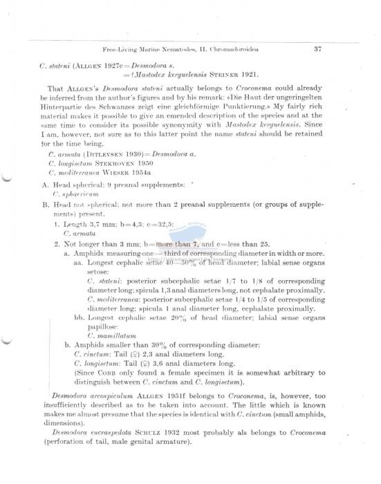Desmodora (Croconema)