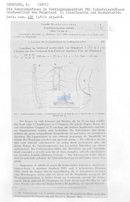 Amphimonohystera subtilis