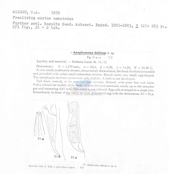 Anoplostoma dubium
