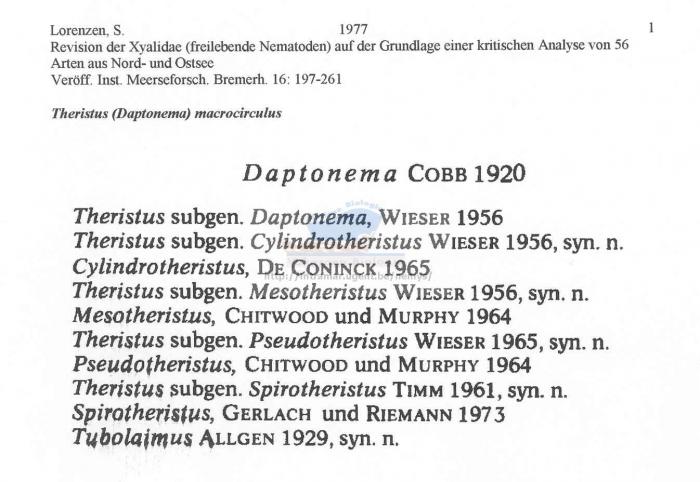 Daptonema macrocirculus