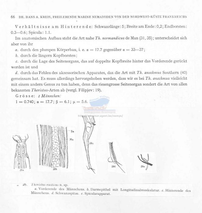 Daptonema rusticus