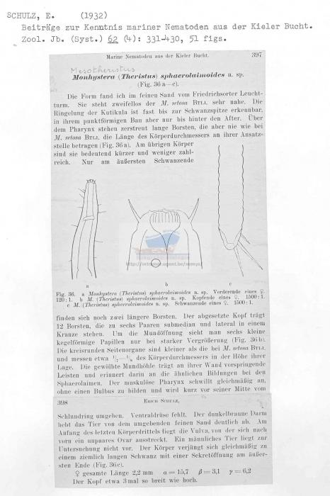 Daptonema sphaerolaimoides