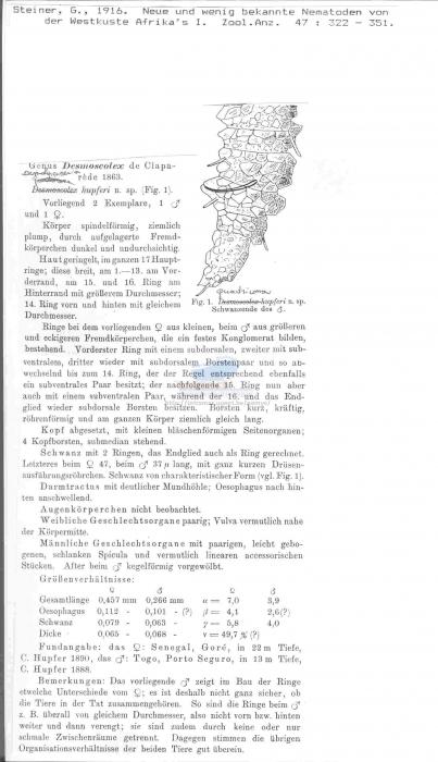 Desmolorenzenia hupferi