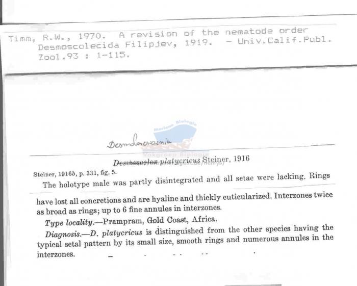 Desmolorenzenia platycricus