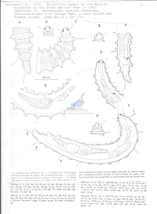 Desmoscolex nymphianus
