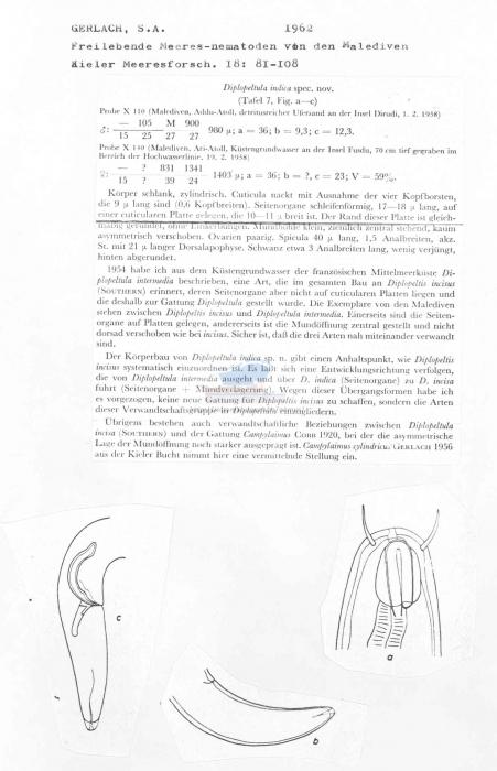 Diplopeltula indica