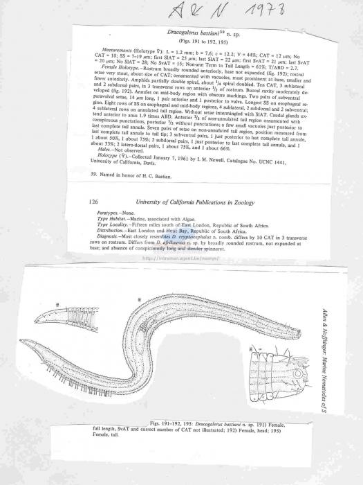 Dracogarelus bastiani