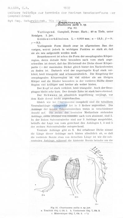 Draconactus suillus